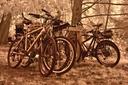 moran bikes
