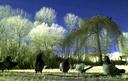 four pidgeons-ir